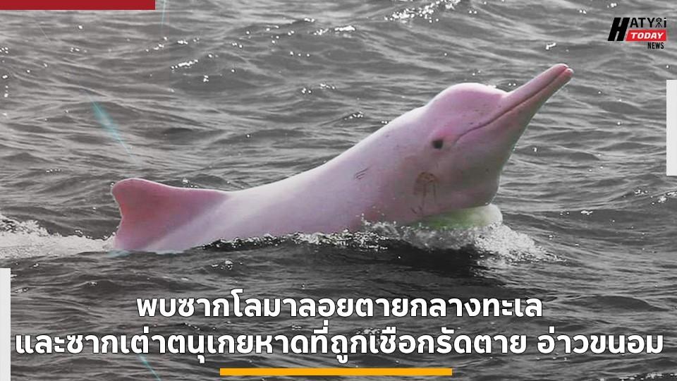 พบซากโลมาลอยตายกลางทะเลและซากเต่าตนุเกยหาดที่ถูกเชือกรัดตาย อ่าวขนอม