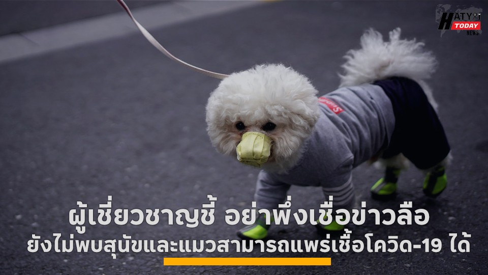 ผู้เชี่ยวชาญชี้ อย่าพึ่งเชื่อข่าวลือ ยังไม่พบสุนัขและแมวสามารถแพร่เชื้อโควิด-19 ได้