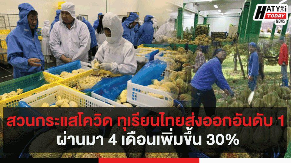 สวนกระแสโควิด ทุเรียนไทยส่งออกอันดับ 1 ผ่านมา 4 เดือนเพิ่มขึ้น 30%