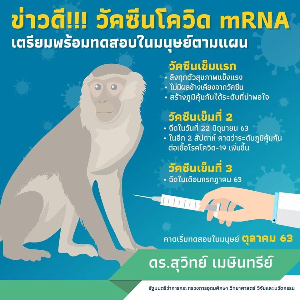 สำเร็จแล้วการฉีดวัคซีนทดสอบโควิด-19 เข็มที่ 2 ในลิง เดือนตุลานี้เริ่มทดสอบในมนุษย์