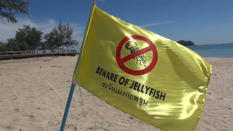 หาดสมิหลา สงขลา ยังไม่พ้นวิกฤตแมงกะพรุนพิษ ยังคงพบนักท่องเที่ยวถูกแมงกะพรุนพิษ