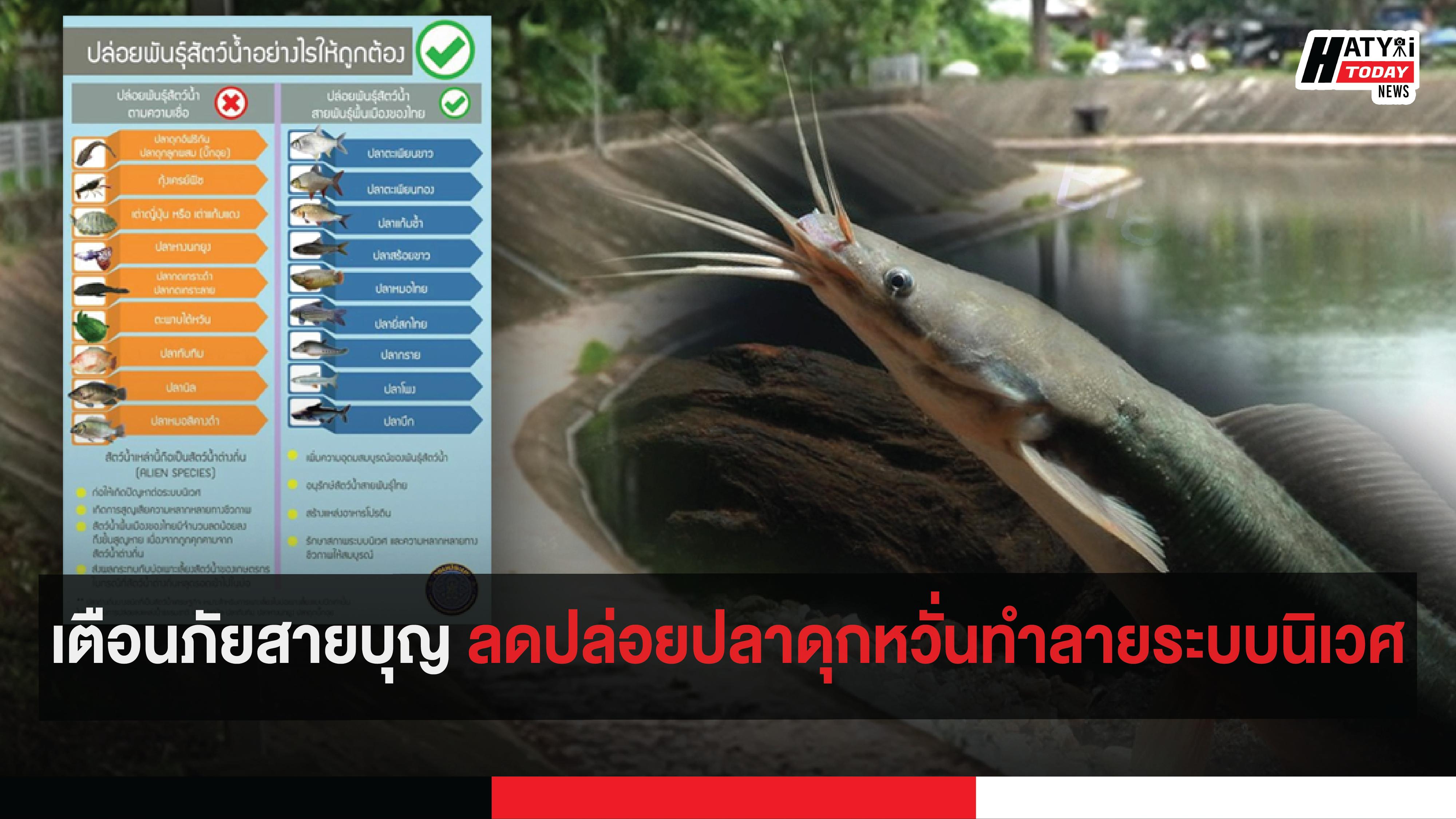 เตือนภัยสายบุญ ลดปล่อยปลาดุกหวั่นทำลายระบบนิเวศ