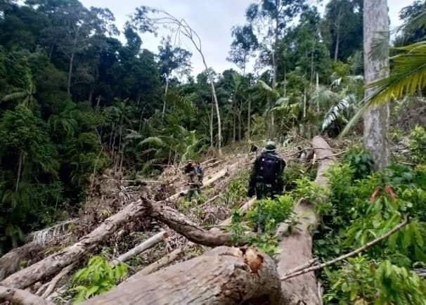 บุกจับเข้มเอาผิดผู้ลักลอบการตัดไม้ทำลายป่าชายแดนใต้อำเภอสะบ้าย้อย-นาทวีล่ามถึงสามจังหวัดใต้