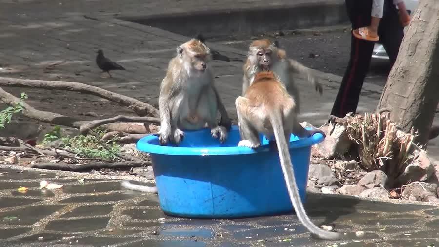 เขาน้อย-เขาตังกวน จ.สงขลา ฝูงลิงดีใจนักท่องเที่ยวคึกคักตลอดวัน