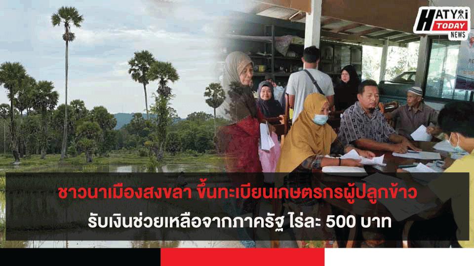 ชาวนาเมืองสงขลา ขึ้นทะเบียนเกษตรกรผู้ปลูกข้าว รับเงินช่วยเหลือจากภาครัฐ ไร่ละ 500 บาท