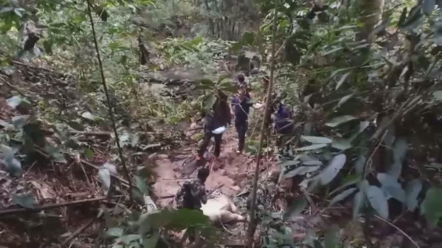 ชาวบ้านพบซากลูกช้างป่าติดบ่วงแร้วลวดสลิงของนายพราน ตายอนาจกลางป่า ในอำเภอกาบัง จังหวัดยะลา