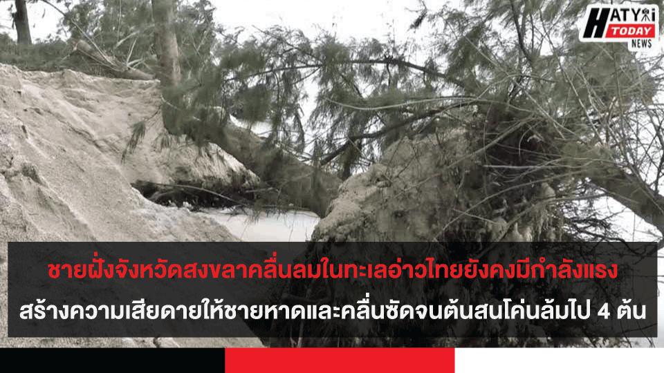 ชายฝั่งจังหวัดสงขลาคลื่นลมในทะเลอ่าวไทยยังคงมีกำลังแรง สร้างความเสียดายให้ชายหาดและคลื่นซัดจนต้นสนโค่นล้มไป 4 ต้น