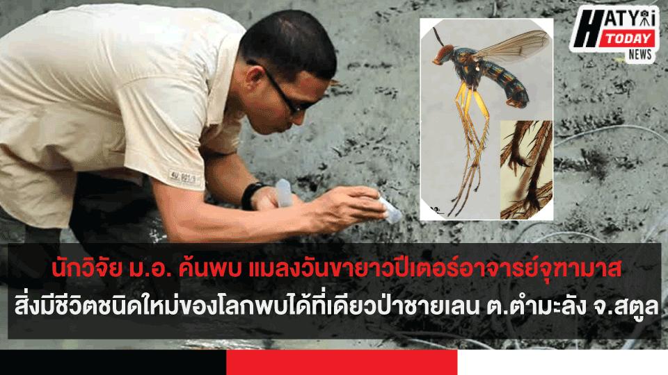 นักวิจัย ม.อ. ค้นพบ แมลงวันขายาวปีเตอร์อาจารย์จุฑามาสสิ่งมีชีวิตชนิดใหม่ของโลก พบได้ที่เดียวป่าชายเลน ต.ตำมะลัง