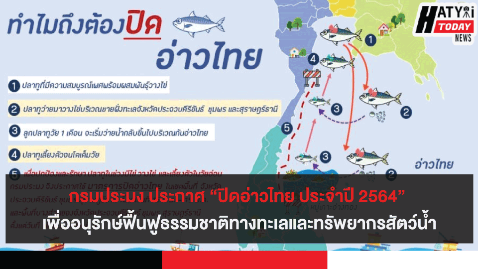 """กรมประมง ประกาศ """"ปิดอ่าวไทย ประจำปี 2564"""" เพื่ออนุรักษ์ฟื้นฟูธรรมชาติทางทะเลและทรัพยากรสัตว์น้ำ"""
