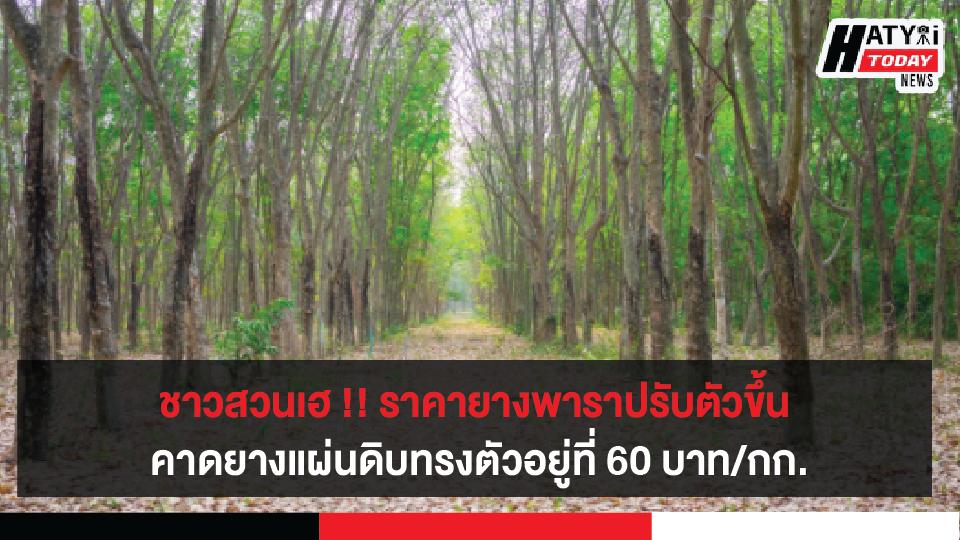ชาวสวนยางเฮต่อเนื่อง ! ราคายางพาราปรับตัวดีขึ้น รัฐฯแก้ปัญหารายได้เกษตรกรอย่างยั่งยืน